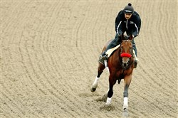 Kentucky Derby winner Nyquist runs during a training session Thursday for the 141st running of the Preakness Stakes at Pimlico Race Course in Baltimore. The Preakness will be run Saturday afternoon.
