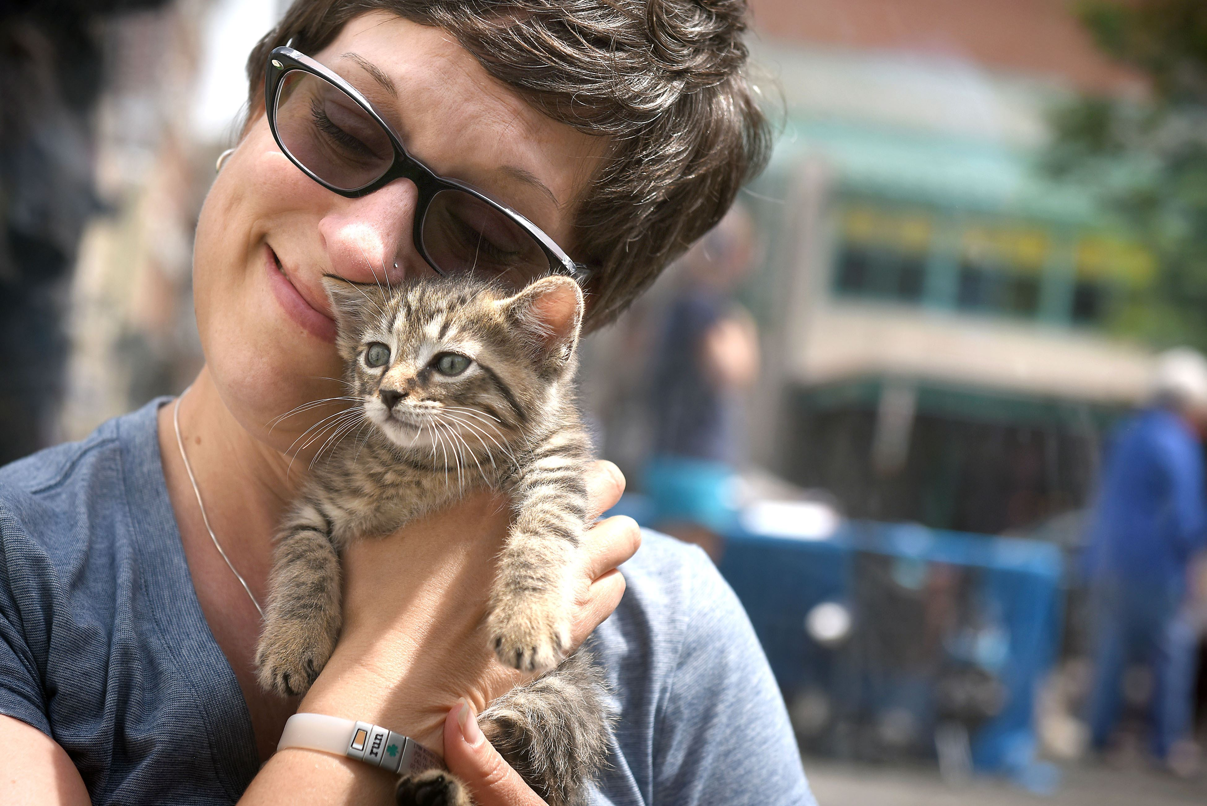 20160520smKitten001 Lynn O'Donnell of the South Side takes a break from her job at PNC Bank to hold one of several kittens brought to Market Square by Animal Friends in an effort to lower stress levels off Downtown office workers.
