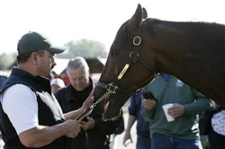 "Nyquist is attended to by hot walker Fernel ""Lefty"" Serrano after a workout Friday at Pimlico Race Course, a day before the 141st running of the Preakness Stakes."
