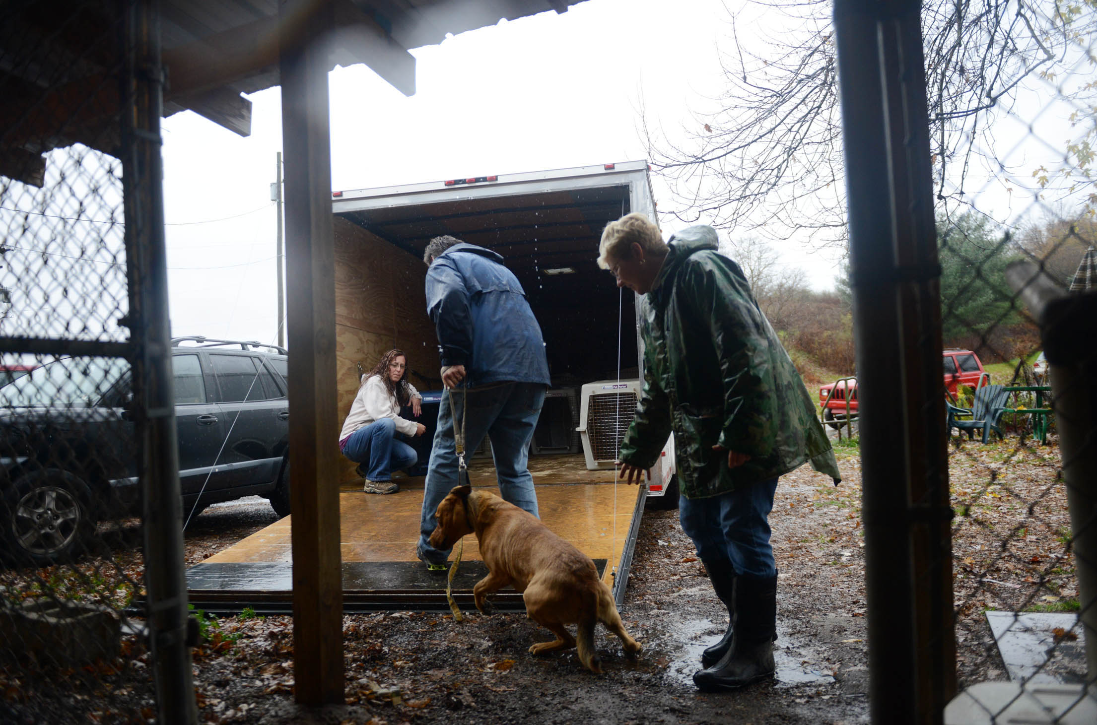OrphansOfTheStorm2-1 Michael Henninger/Post-Gazette----local------- 10/29/12 Volunteers and the staff of Orphans of the Storm, an animal shelter in Kittanning that sits close to the Allegeny River, work to evacuate animals in anticipation of possible flooding from Hurricane Sandy on Monday, Oct. 29, 2012.