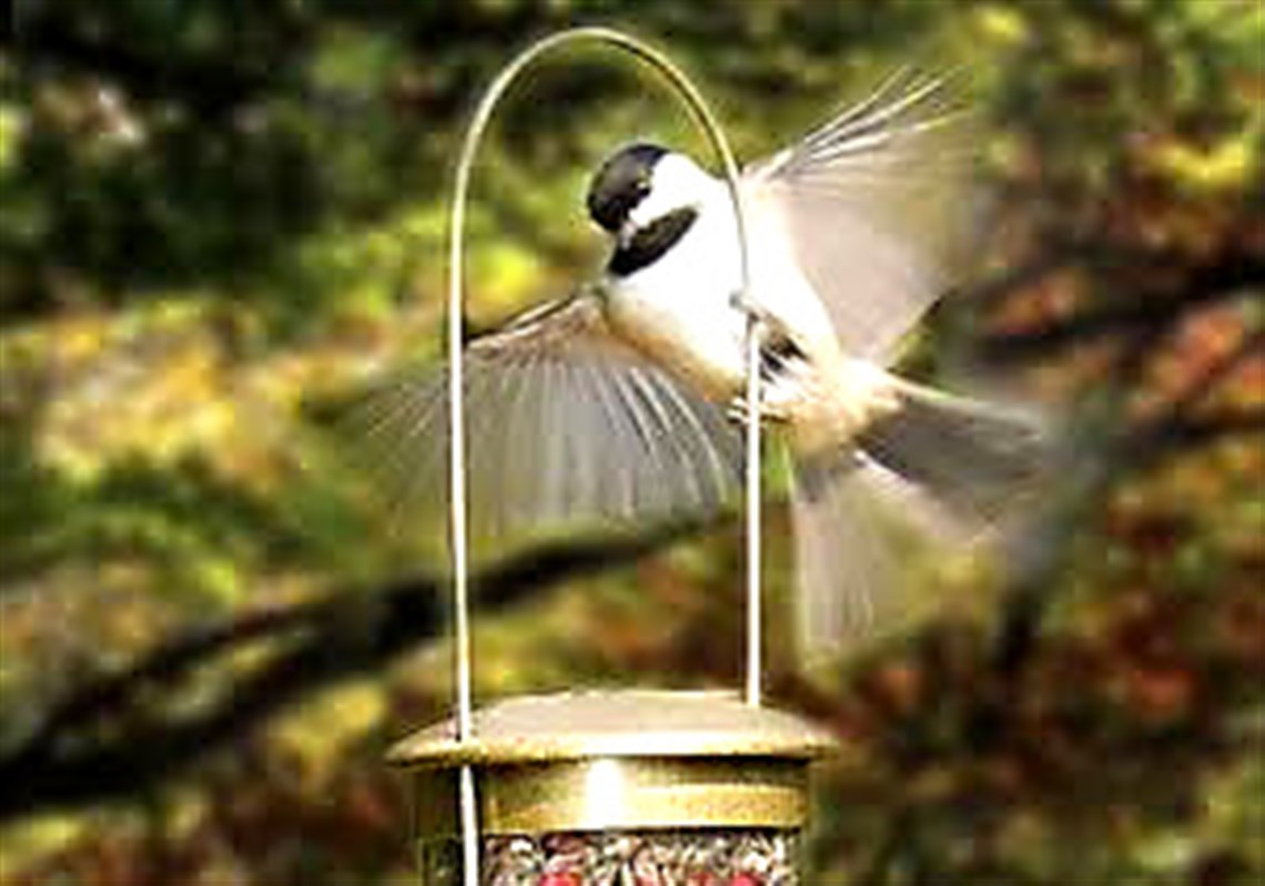 do squirrels has to phenomenal bird you from birds resolution how images feeder house off your houses home keep high away