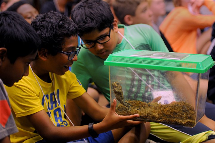 20160622ppAlcosan2LOC-1 Aryan Bonigala and Rithwik Nagavelli, day campers at Alcosan's Summer Science camp for fourth and fifth graders, marvel over a frog during a presentation by April Claus, a naturalist from the Fern Hollow Nature Center.