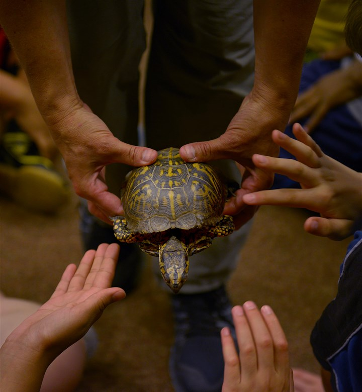 20160622ppAlcosan1LOC Day campers at the Alcosan Summer Science camp for fourth and fifth graders, reach out to touch a turtle during a presentation by April Claus, a naturalist from the Fern Hollow Nature Center.