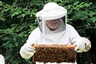 robison_bees_01