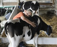 T.J. Frye, 7, hugs his calf, Old Betsy, while getting ready to show her at a previous Westmoreland County Fair.