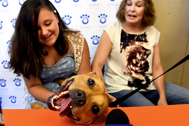 Effie, a 3-year-old pit bull, is all smiles as she poses with her new family, Katrina, 12, and her mother, Pittsburgh Police Officer Christine Luffey, during a news conference Monday at the Western Pa. Humane Society. Effie was found in February, nearly starved to death, in a Homewood apartment.