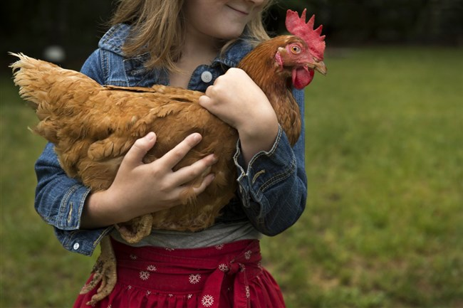Kissing chickens and keeping them in your house instead of outside is bad for your health, the CDC warns.