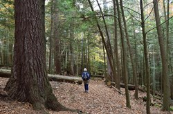 Some of the hikes during the Keystone Trails Association Fall Weekend will take place in Cook Forest State Park.