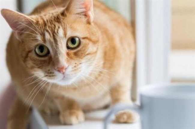 Cat-loving customers can pay a small fee to take their beverages upstairs if they wish to mix and mingle and de-stress by visiting the cats at Colony Cafe.