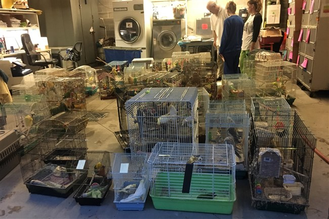 Some of the animals rescued from a Brookline home on Nov. 1.