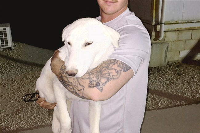 Army Sgt. Christian Cox holds Ghost, a white puppy he and other soldiers befriended in the Middle East. Ghost was flown to Pittsburgh by Guardians of Rescue and now lives with the soldier's family in Whitehall.