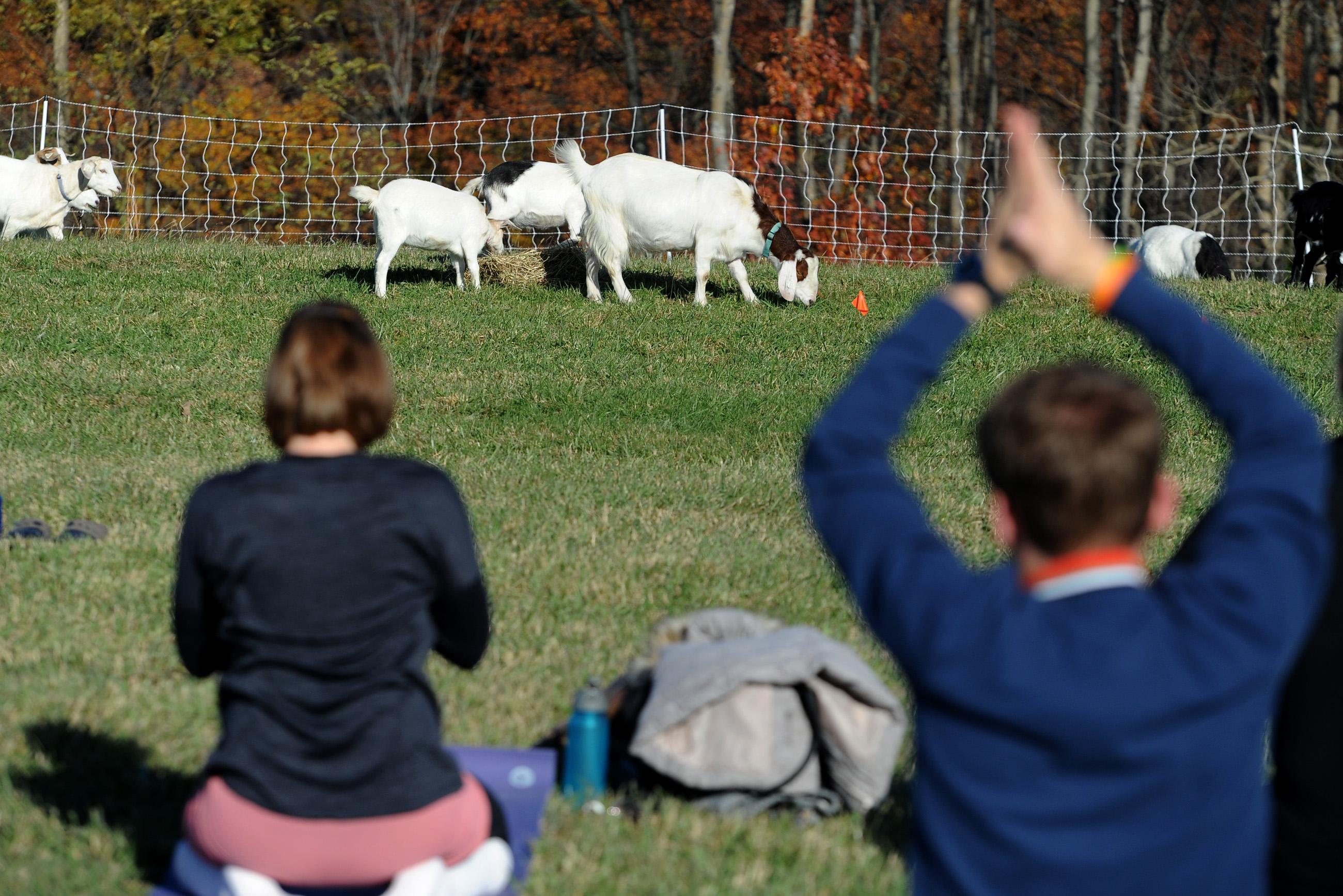 20161112ppNamasHayYoga4MAG-3 Pam Panchak/Post-Gazette 11122016 PHOTOSLUG: NasmasHayYoga SECTION: Mag CAPTION: A yoga session at the NamasHay Goat Yoga fundraiser for the Western Pa. Humane Society at Have U Heard goat farm in Collier Twp. Thursday, November 12, 2016.