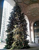 The Christmas tree in the portico of the City-County Building, Downtown. When the sunlight hits the tree at a certain angle, it makes the shape of a kneeling angel as it plays on the shapes of the branches.