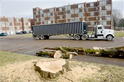 Freshly cut trees lay outside the Penn Plaza Apartments in East Liberty on Feb 7.