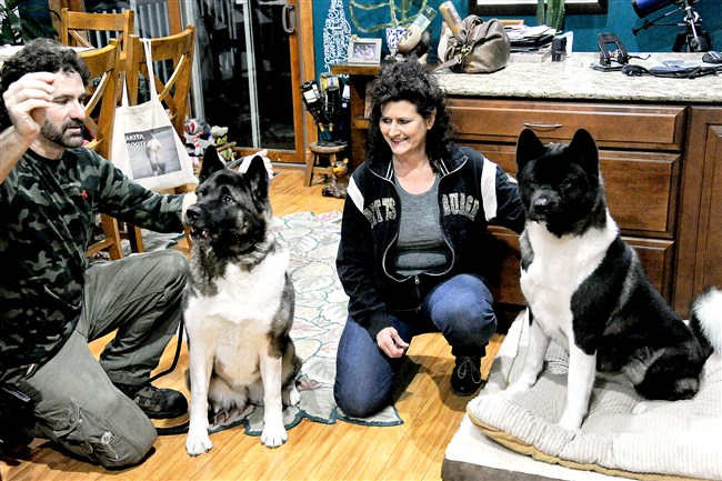 David and Patti Pulkowski of West Mifflin with their Akita dogs Sydney, left, and Jazzie.