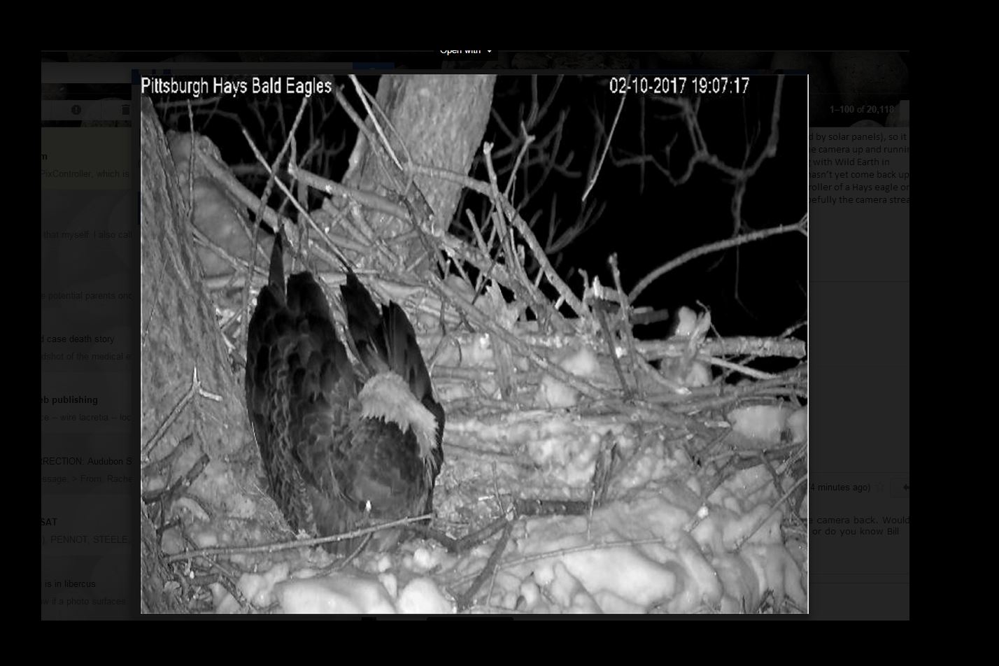 First egg spotted on Hanover Eagle Cam Friday evening