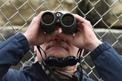 Jim Bonner, executive director of the Audubon Society of Western Pennsylvania, uses binoculars to get a better view of the Hays eagles on Monday.