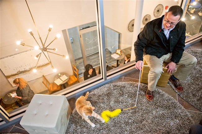"""John Gratner, 39, of Bellevue, sits in the """"Cat Loft"""" Wednesday as he plays with rescue cat Zinfandel at a preview night for Colony Cat Cafe in the Strip District. All cats at the cafe are available for adoption through Animal Friends."""