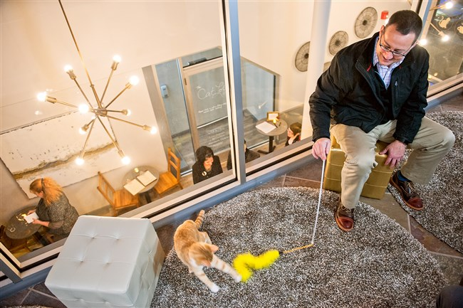John Gratner of Bellevue plays with new friend Zinfandel at the opening of Colony Cat Cafe in the Strip District earlier this week
