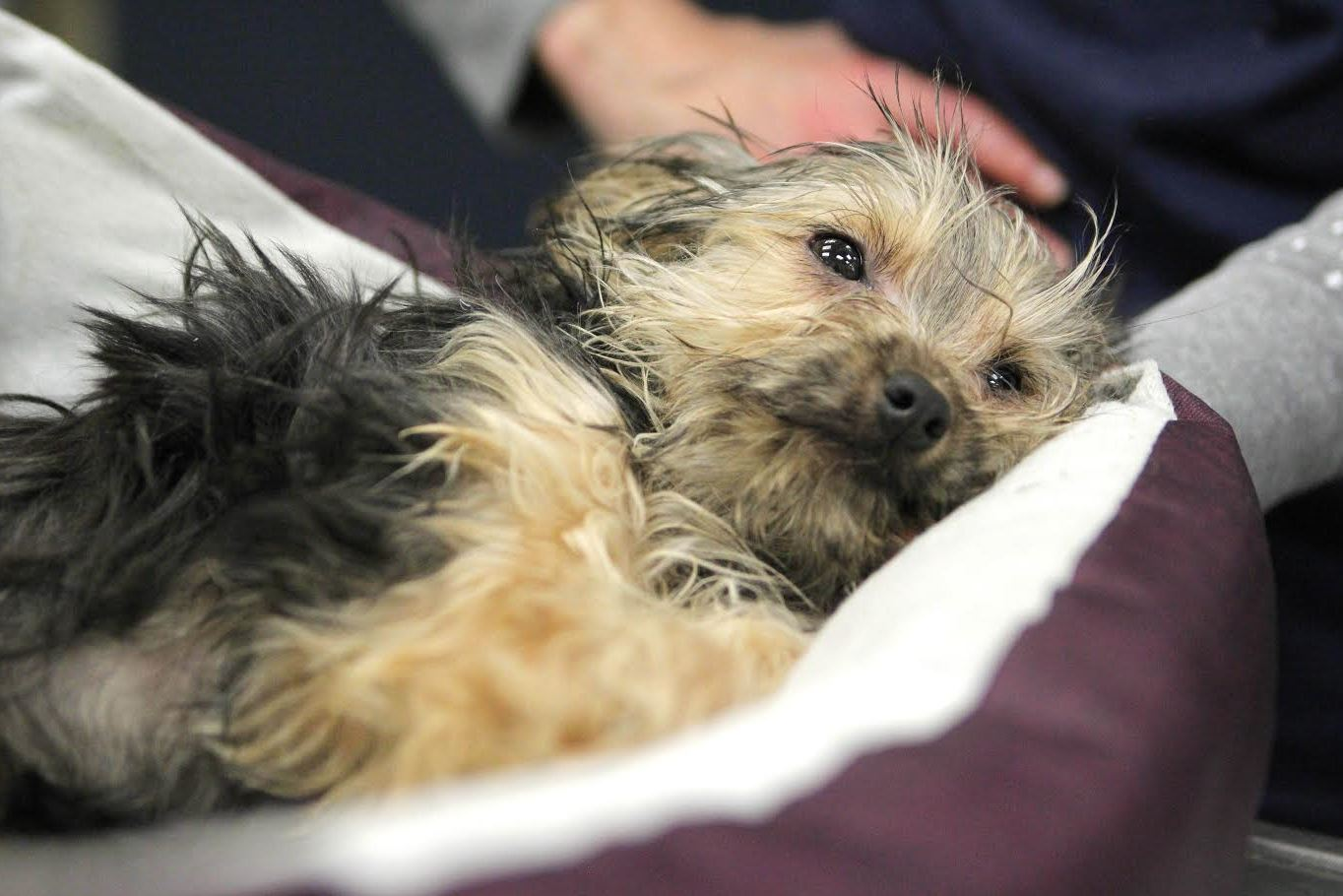 Police investigating after dog with broken legs abandoned ...