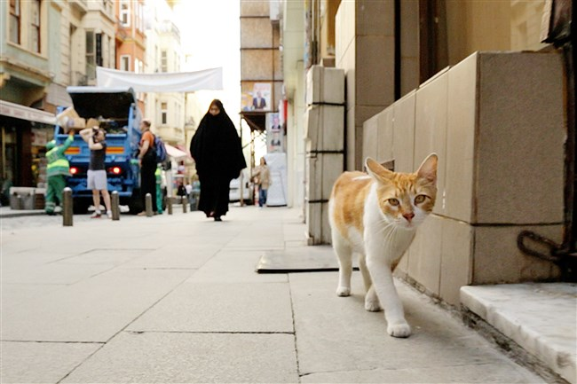 """A scene from the documentary """"Kedi: The Cats of Istanbul,"""" which will be shown at Row House Cinema's Cat Film Festival."""