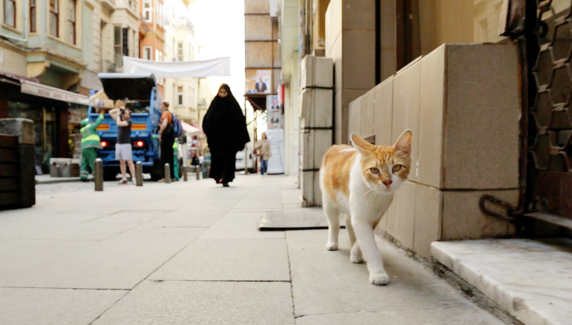 """kedi 5-4 A scene from the documentary """"Kedi: The Cats of Istanbul,"""" which will be shown at Row House Cinema's Cat Film Festival."""
