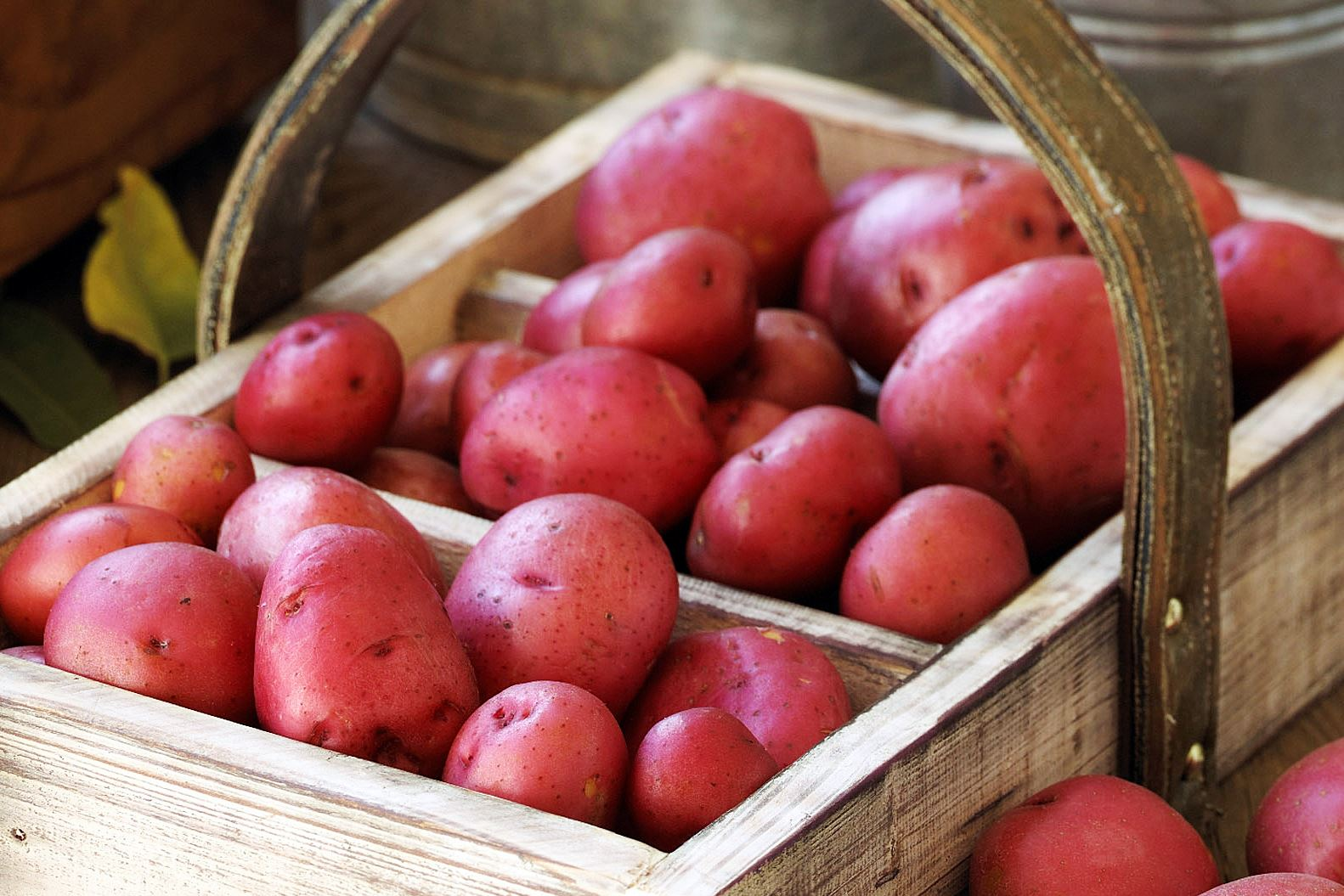 red potatoes-3 Subtly sweet in flavor, red potatoes have a waxy, moist and creamy texture.