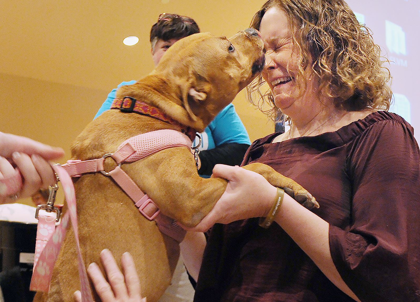 20170304rldBiscuitBingo02 Officer Christine Luffey reacts as she's greeted with full-face licks by Effie during the bingo event. Effie, the abused pit bull who was found and then adopted by Officer Luffey, visited the event.