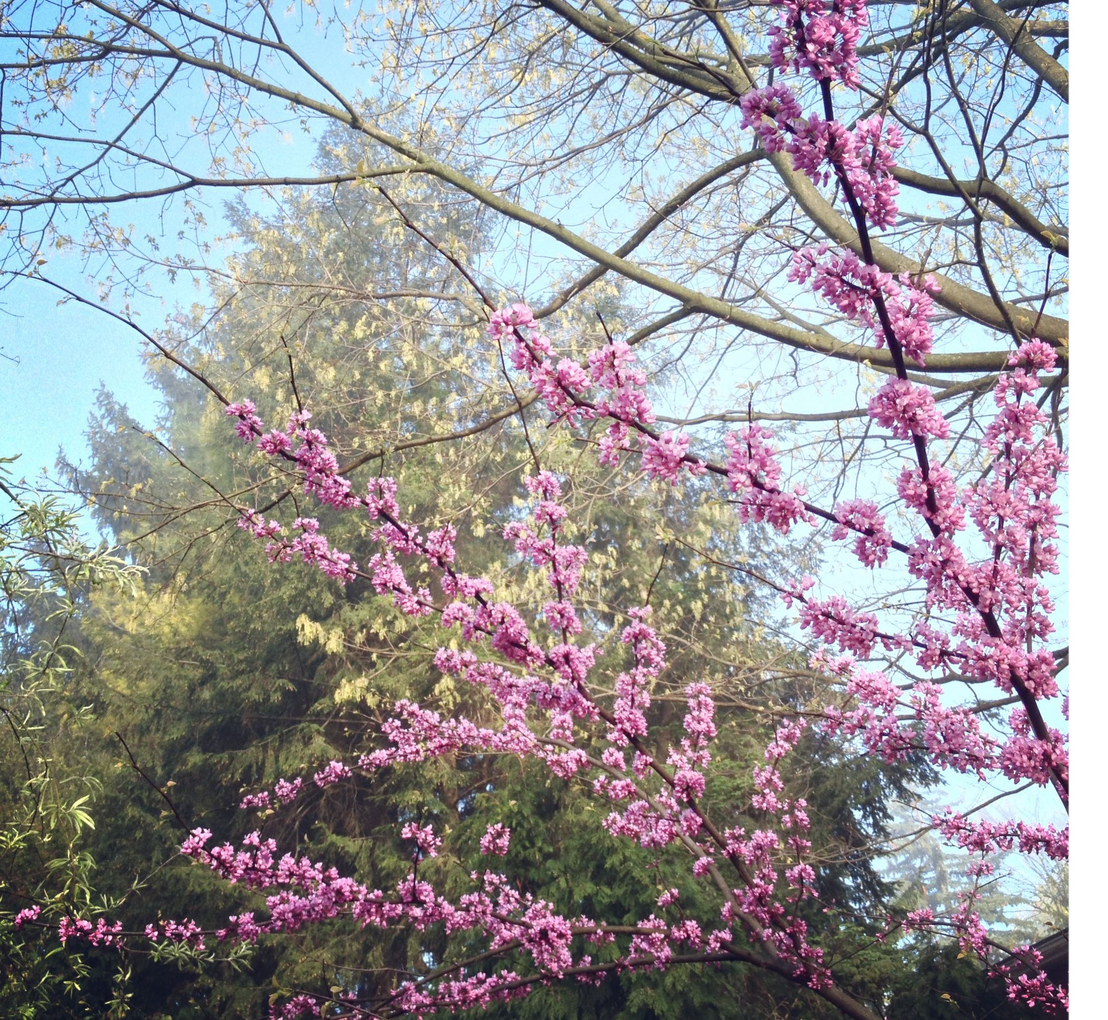 Native Pa Plants: Pennsylvania Native Trees A Great Fit For Local Gardens