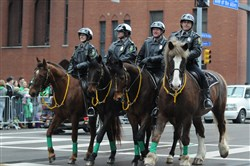 Allegheny County Police have had a mounted patrol for a number of years, above, and now the Pittsburgh police recently reinstated the use of police-mounted horses after a 14-year hiatus.