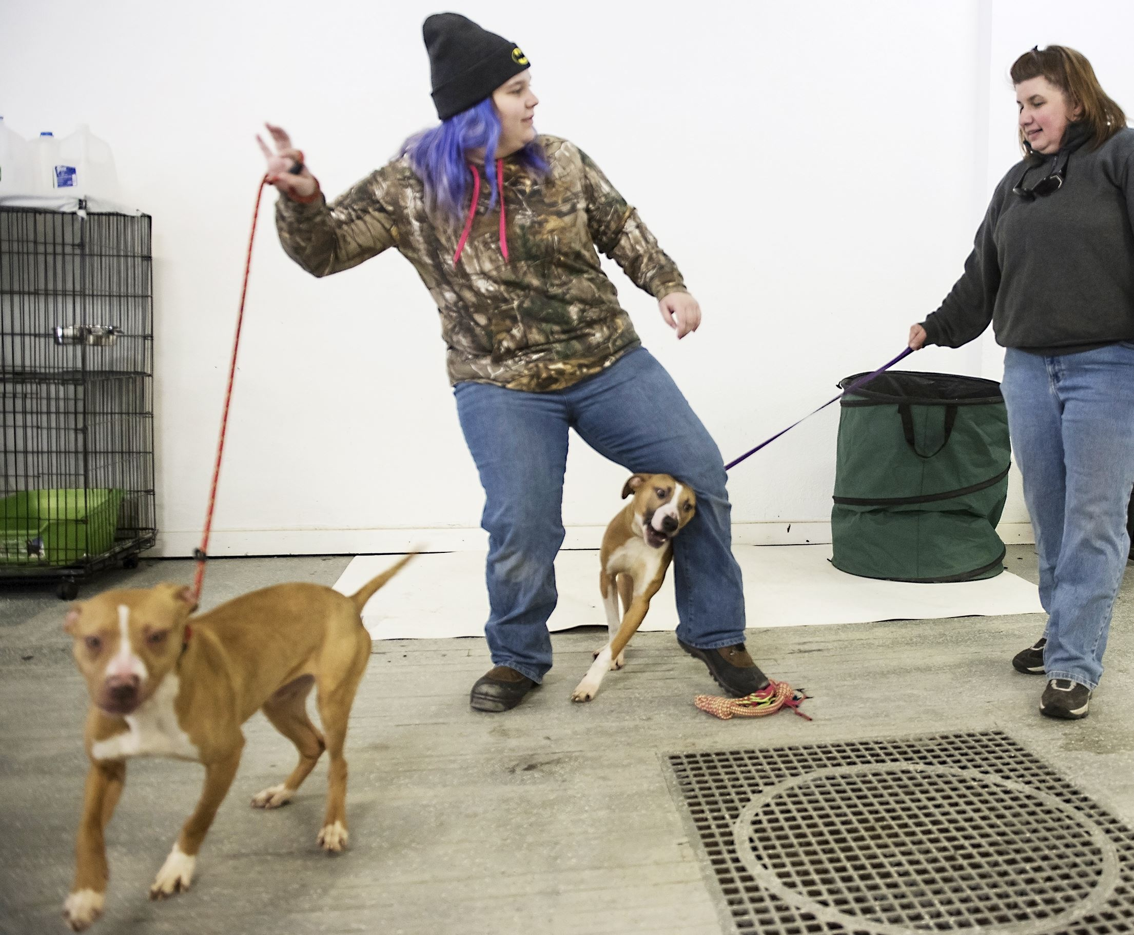 20170315hnpettales0318-3-2 Volunteer Gabriella Rankin, 15, left, is pulled one direction by Princess while Garfield runs between her legs and dog trainer Annette Sexton pulls him in at the Gaydos-Behanna Kennel in Clairton.