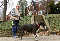 Tom McMullin , 71, of Edgewood, walks his pit bull terrier Roscoe three times a day.