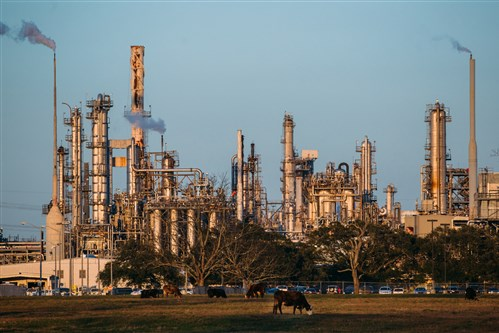 Cows graze on grass on land that Shell rents to cattle farmer outside the Shell Chemicals Geismar plant in Geismar, La.
