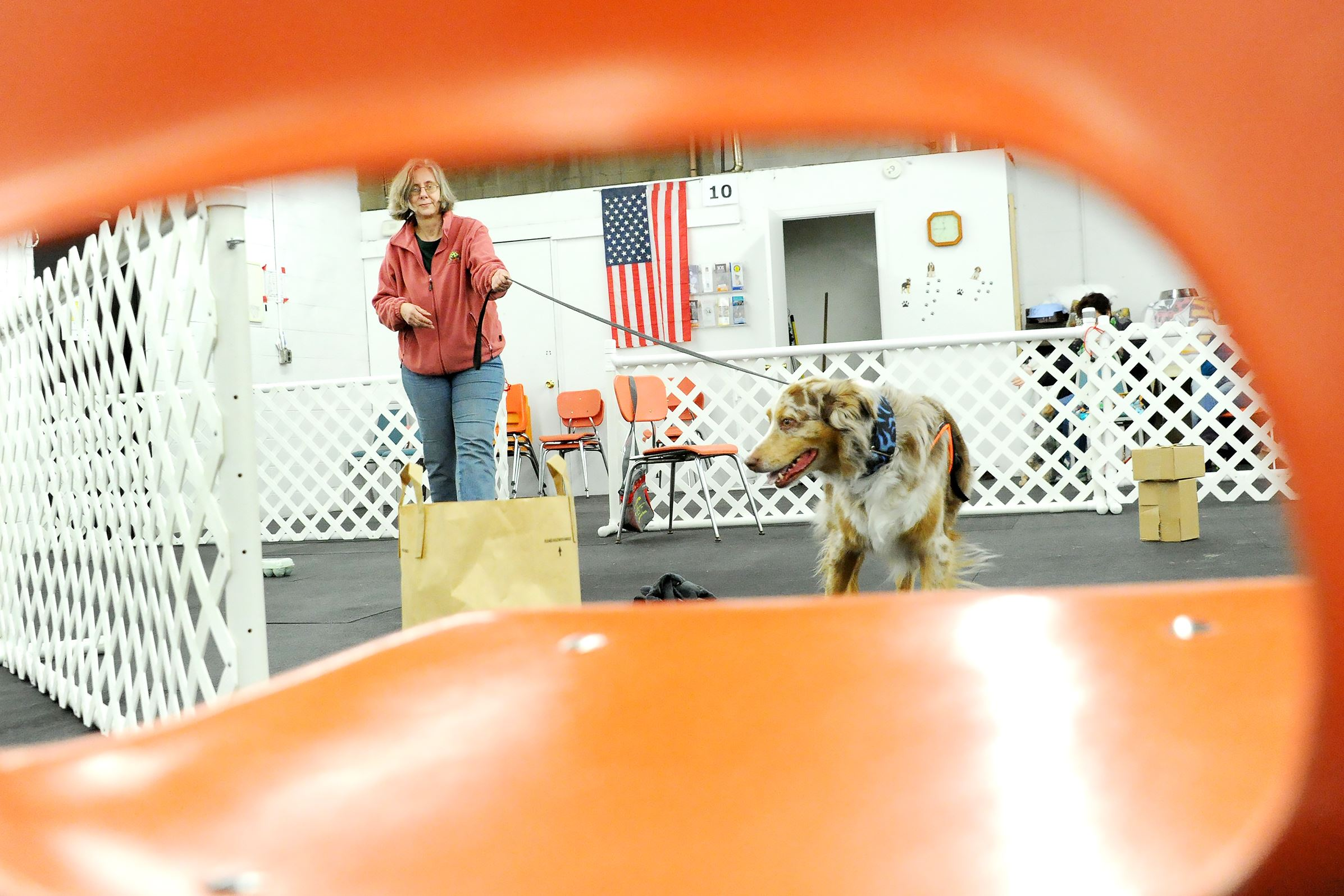 20170317lf-Dog05-4 Trainer Maribeth Hook leads Kobi, her 8-year-old Australian shepherd, in the nose work class at Keystone Canine Training Club .