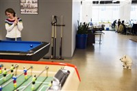 Duolingo employee Amanda Strader plays pool as Bunny, a 15-year-old West Highland White Terrier owned by CEO Luis von Ahn, looks on in March at the company's East Liberty headquarters.
