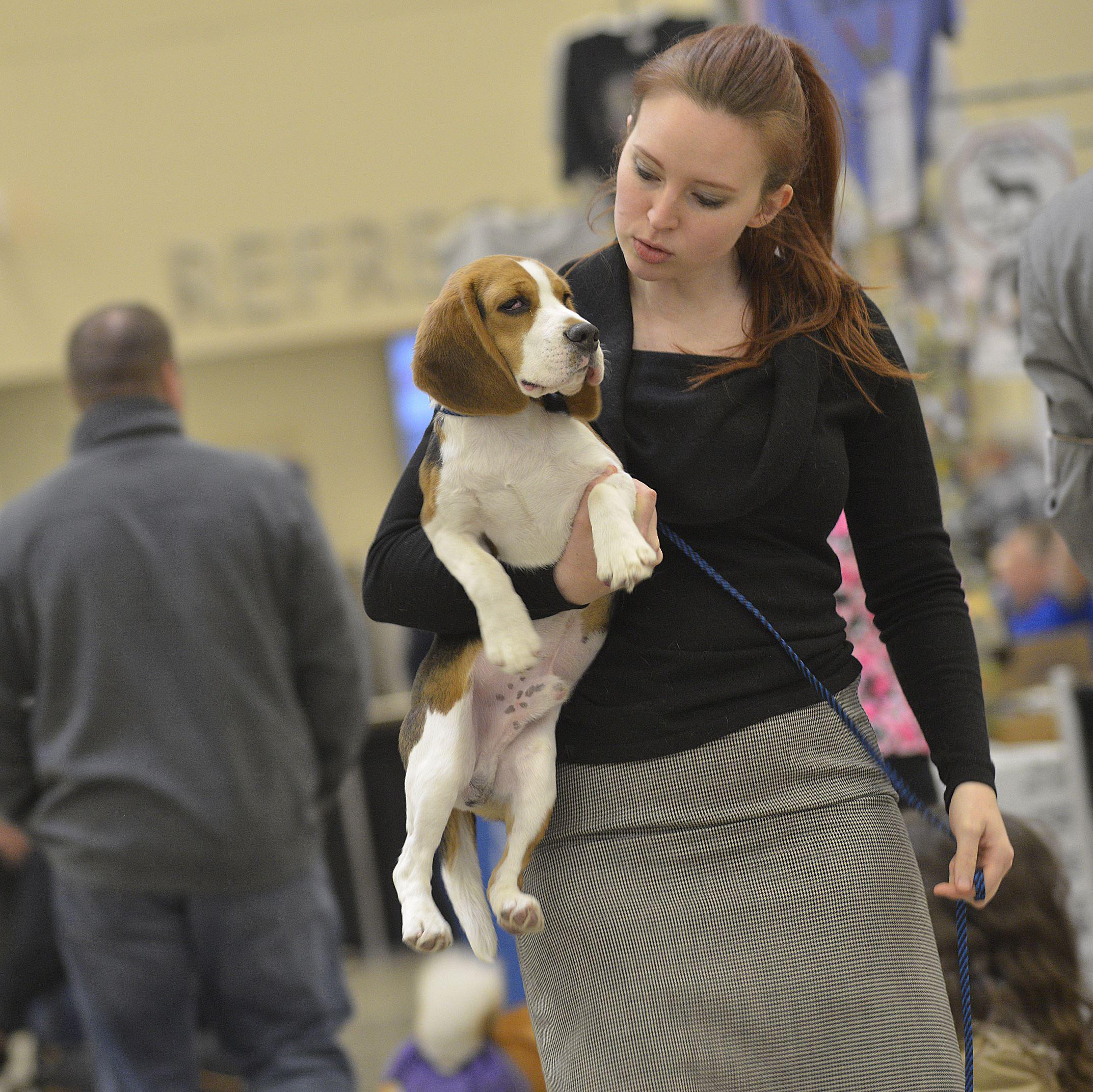 20170402lrpadogshow06-4 Brigette Lefevre of Blackridge carries Coal, a 6-month-old beagle.