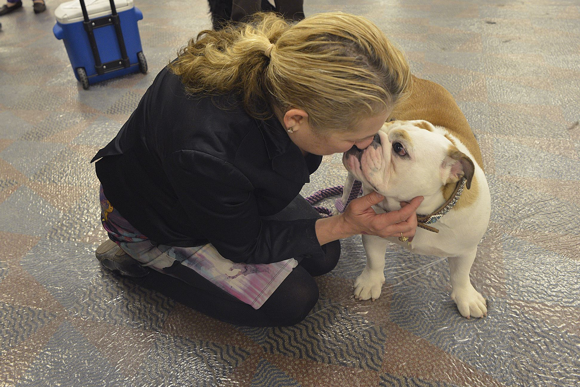20170402padogshow05-18 Crystal Bennett of Beaver gives a kiss to Marilyn, her 7-month-old English Bulldog.