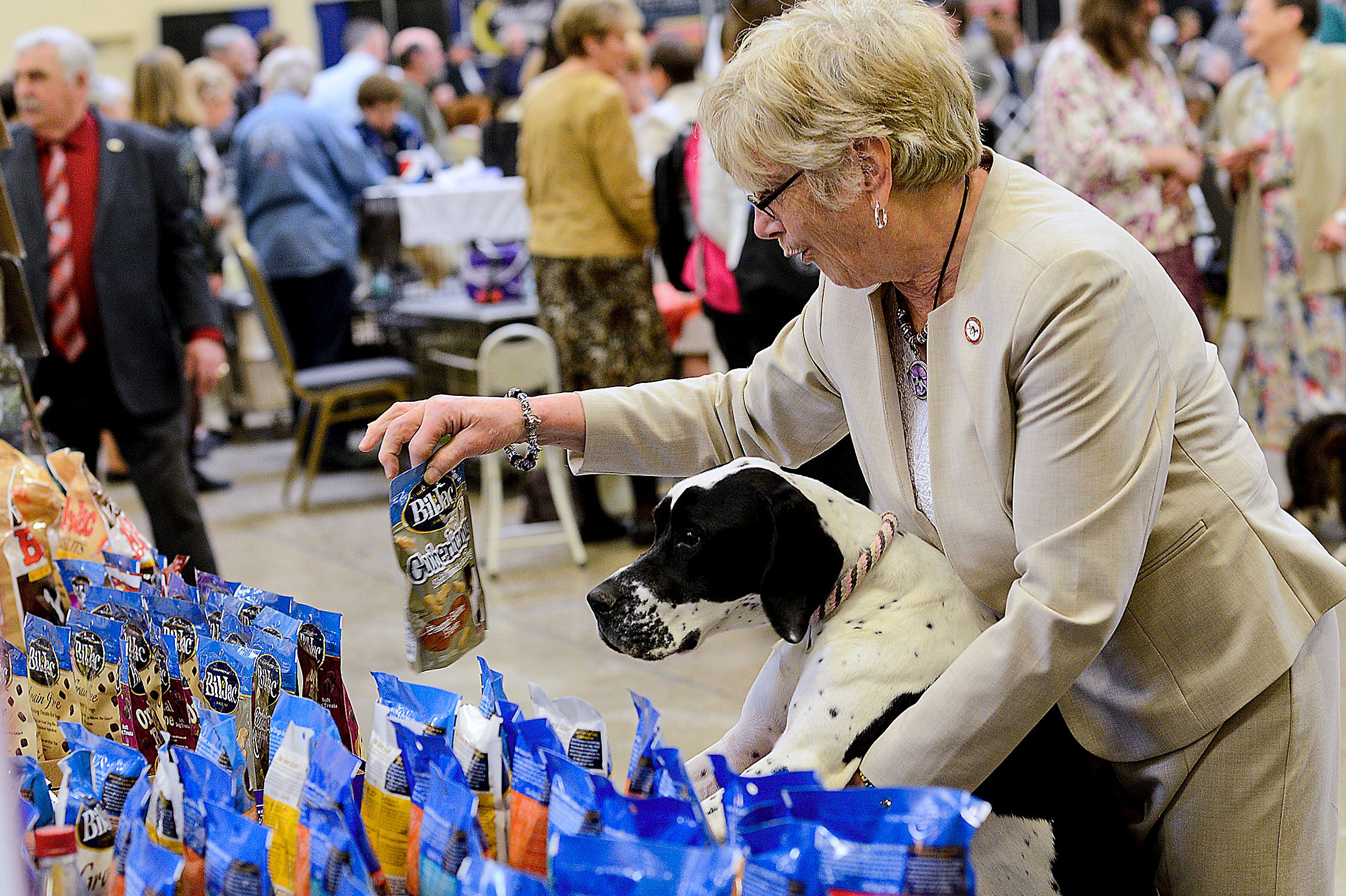 20170402lrpadogshow07-5 Panda, an 8-month-old pointer, is shown a bag of dog food by owner Louise Ritter from Ellwood City.