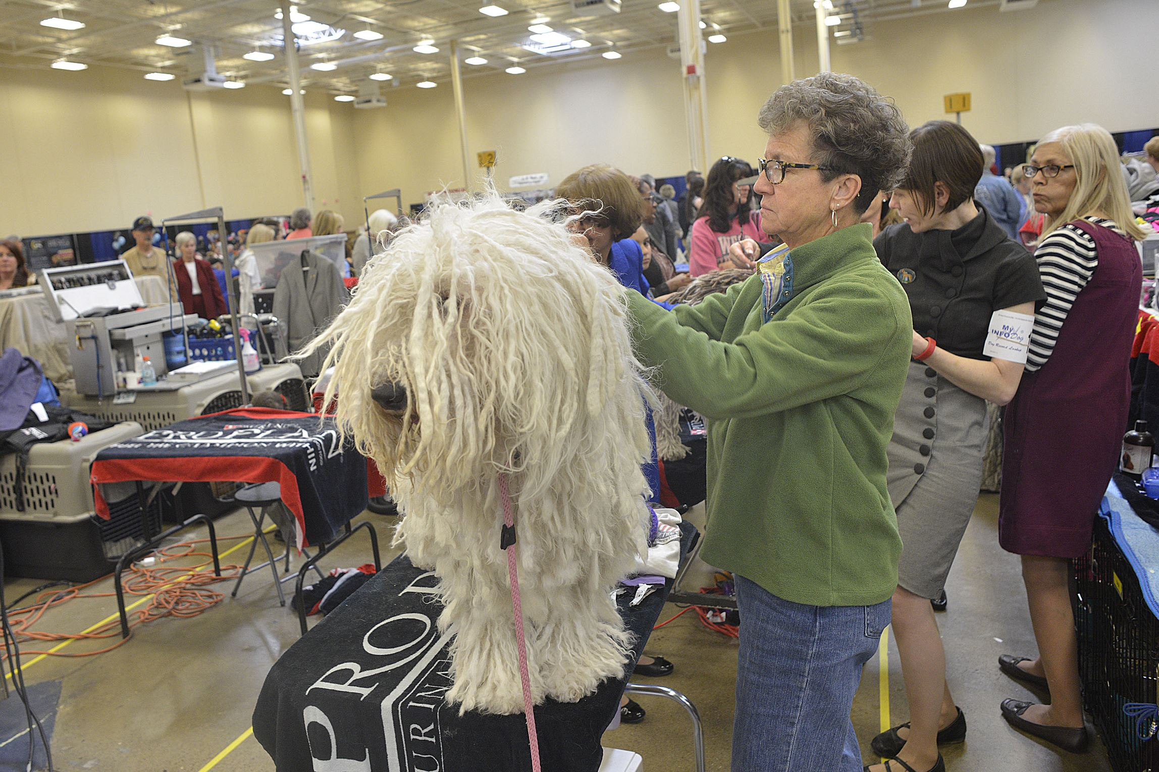 20170402lrpadogshow18-16 Betty Boop, a Komondor from Virginia, is groomed by Val McNeli.
