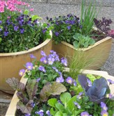 Pansies and greens share a container.
