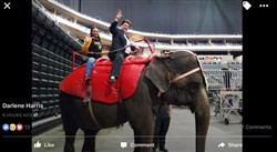 A Facebook post from Pittsburgh mayoral candidate and City Councilwoman Darlene Harris shows her riding atop an elephant at the Shriner's Circus.