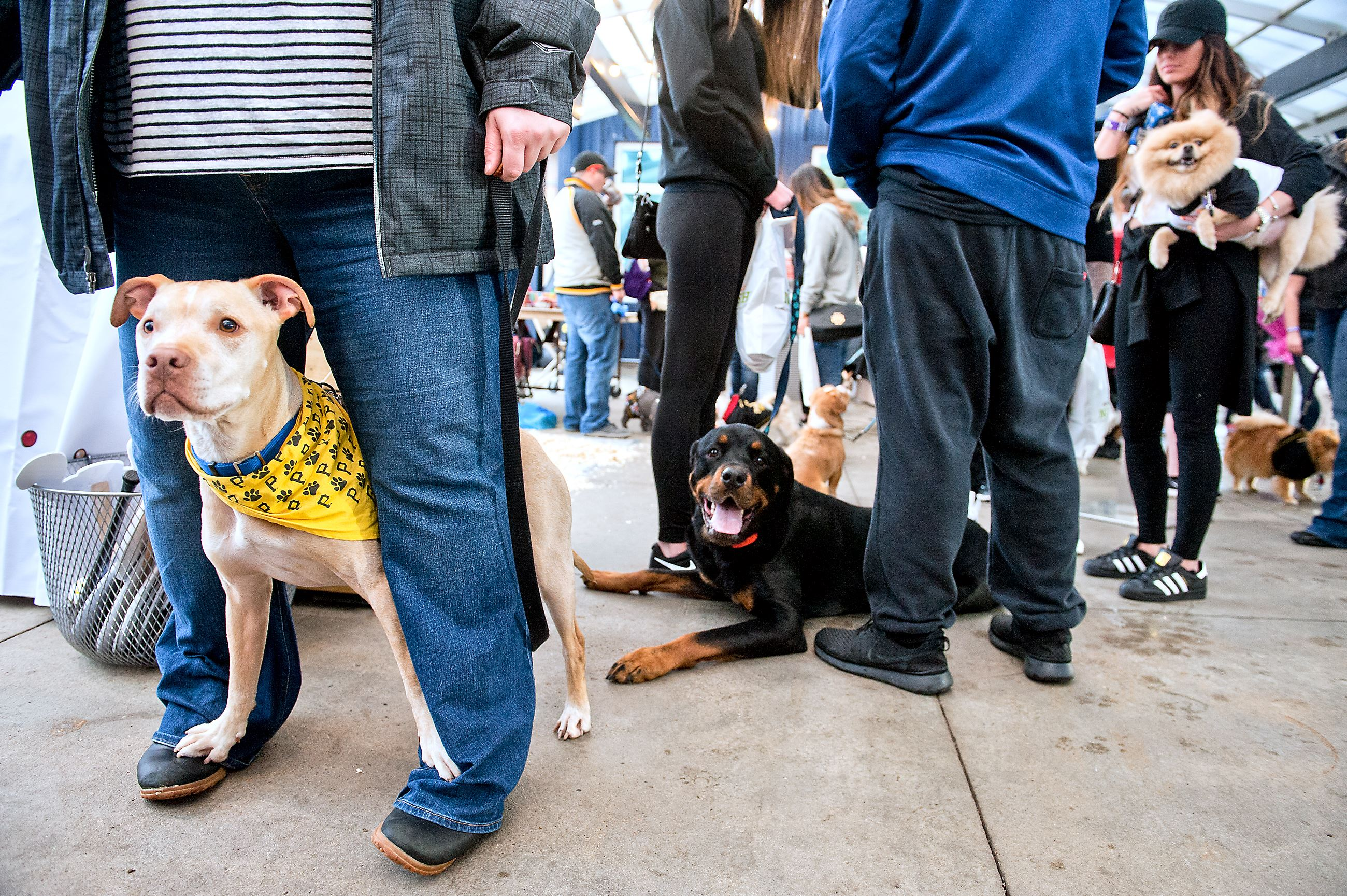 """20170411smsPupNight04 Layla rests her paws on the feet of Meghan Miller of Kent, Ohio. Christina Gillespie of Carnegie was along, watching Layla for her sister. """"She came last year, too. She loves it here."""""""