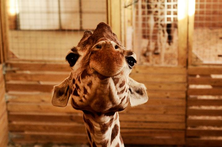 Animal Adventure Park wants you to help name April's baby!