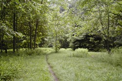 Jones Mill Run Trail, part of the upcoming Arbor Day Hike in the Laurel Highlands.