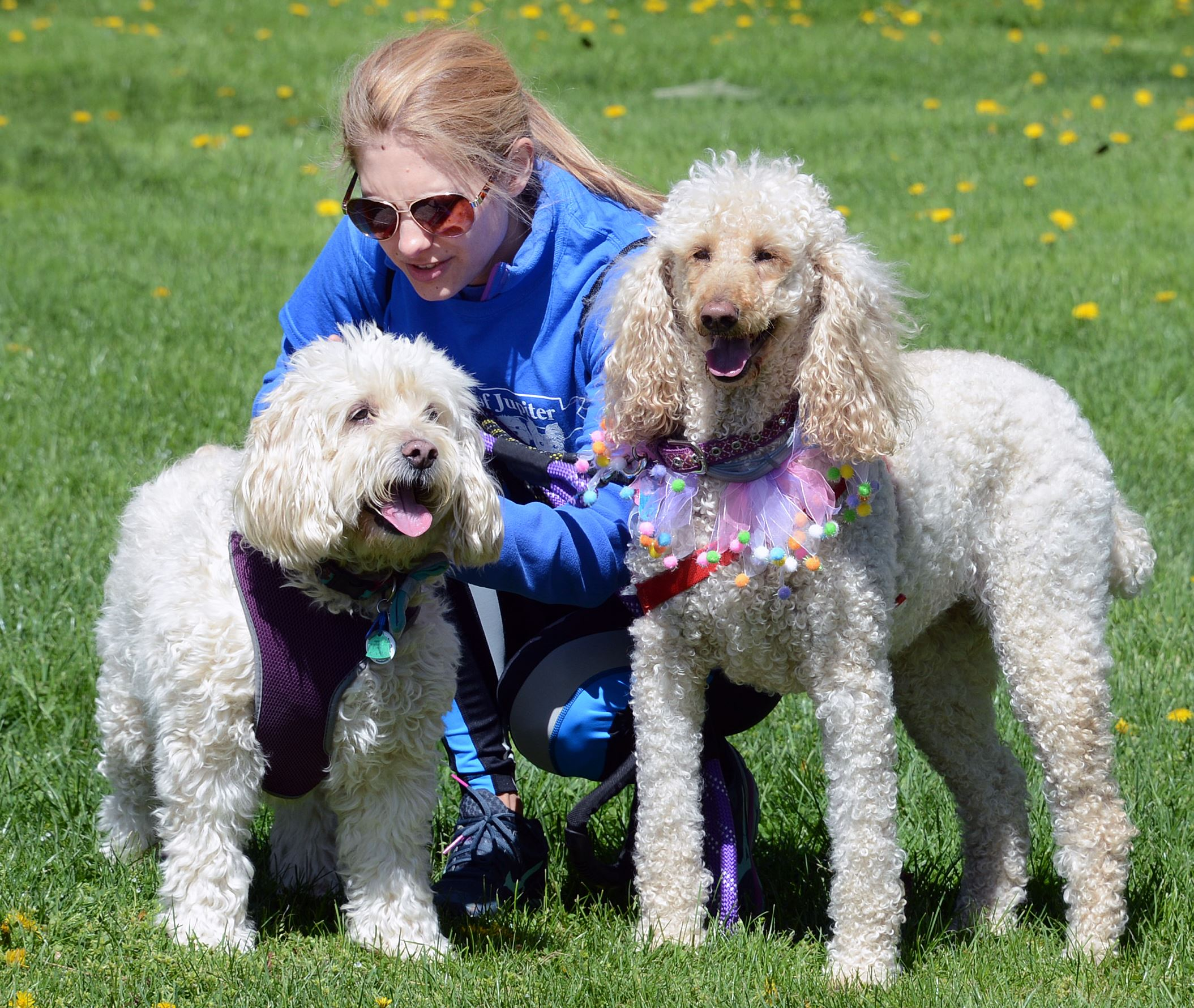20170423ng-Petwalk4-3 Rachel Mazur of Monroeville with her two dogs during the during the Friends of Jupiter Walk in Boyce Park Sunday.