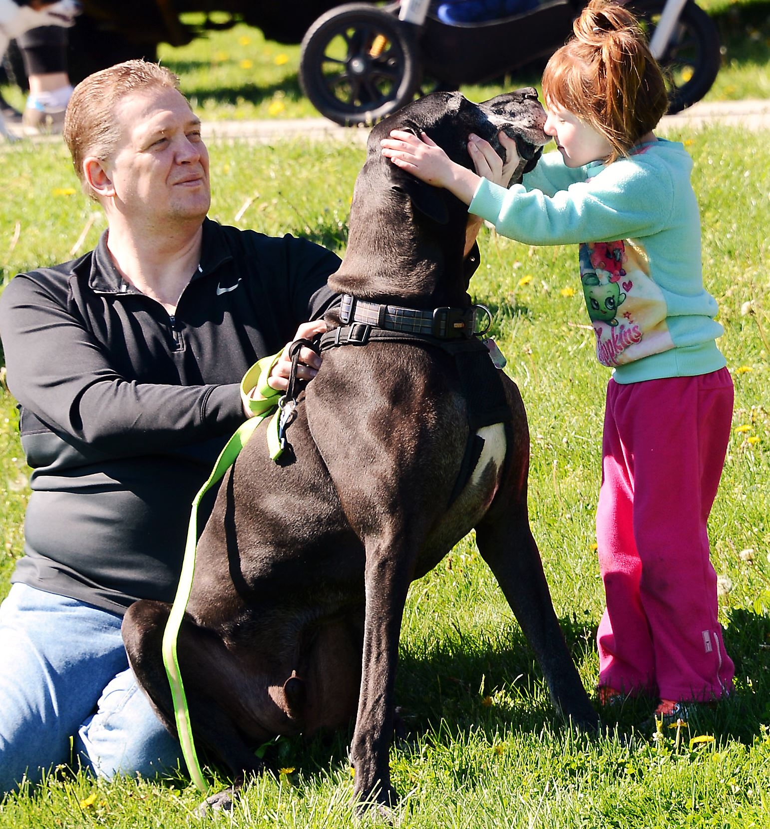 20170423ng-Petwalk3-2 Russ Stroschein of Turtle Creek looks on as Bo, his 10-year-old Great Dane, gets a hug and a kiss from Bentley Paustenbaugh of Sarver during the Friends of Jupiter Walk in Boyce Park.