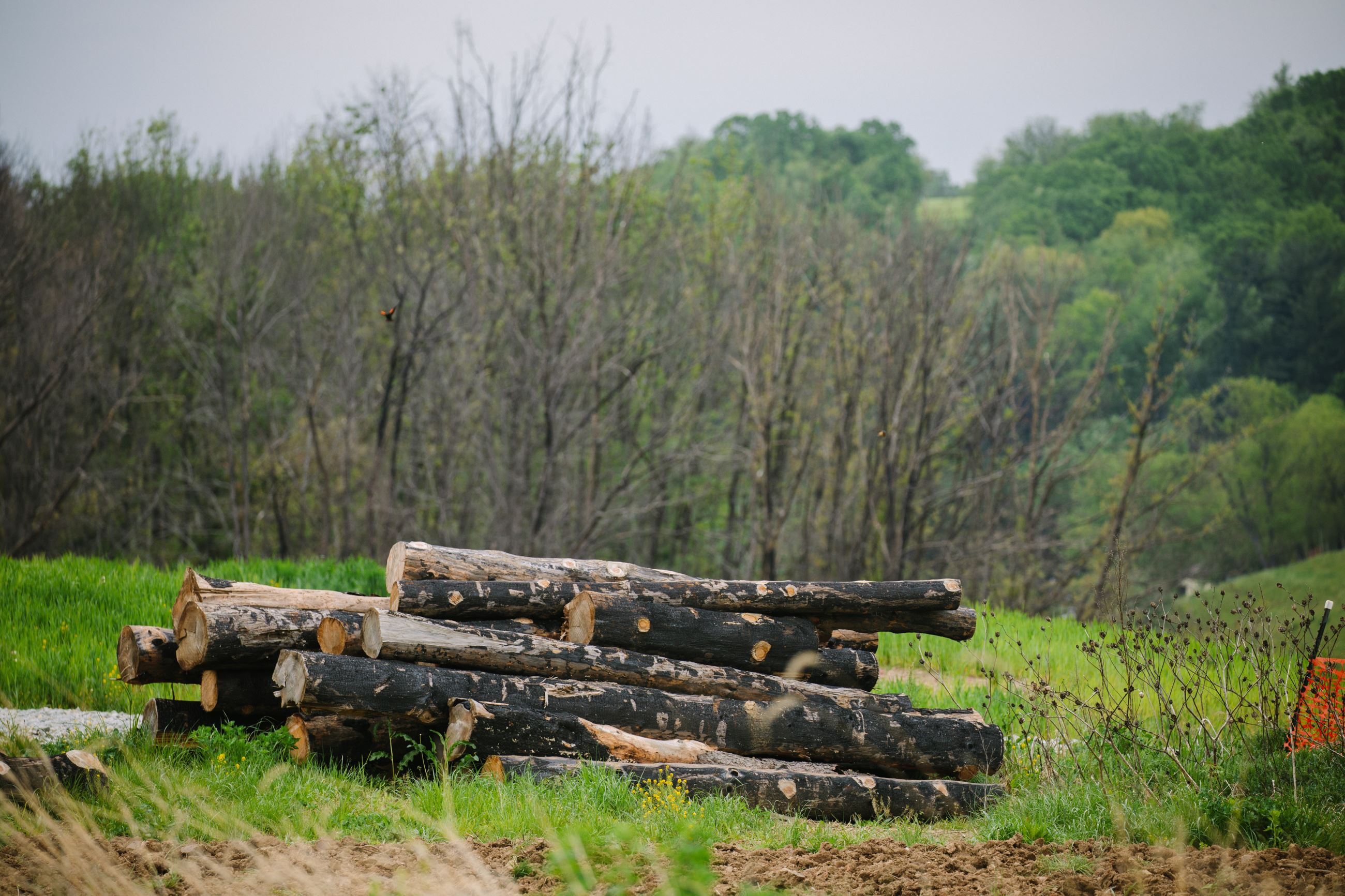 20170503arSalemBlast07-6 A pile of burned logs is all that is left on the site of the pipeline blast along Route 819 in Salem Township.