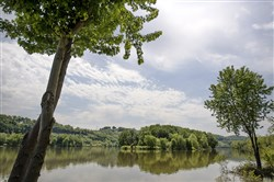 Sycamore Island, seen between two trees, is reflected onto the Allegheny River near Blawnox. The Western Pennsylvania Mushroom Club will pay a visit there to document the growth of its mushroom population.