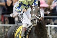 Jockey John Velazquez pulls up on Always Dreaming aftter he finished well back in the pack Saturday.