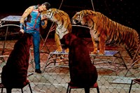 Big cat trainer Alexander Lacey hugs one of the tigers during the final show of the Ringling Bros. and Barnum & Bailey Circus on Sunday in Uniondale, N.Y.